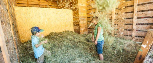 Beitragsbild Schlechtwetter – Grünlandbetrieb & Milchviehhaltung – Landwirtschaft am Hacklbauer in Altenmarkt, Salzburger Land