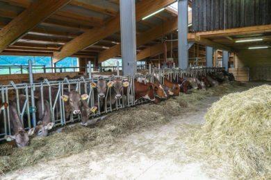 Tiere am Hacklbauernhof –Schlechtwetter-Programm im Bauernhofurlaub in Altenmarkt im Pongau, Salzburger Land