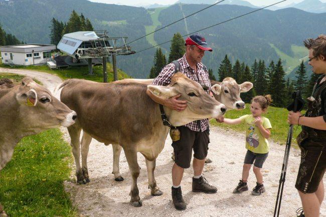 Wandern mit Kühen –Spiel & Spaß beim Hacklbauer –Kinderparadies im Bauernhofurlaub in Altenmarkt, Salzburger Land
